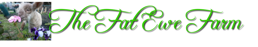 The Fat Ewe Farm and Bed and Breakfast